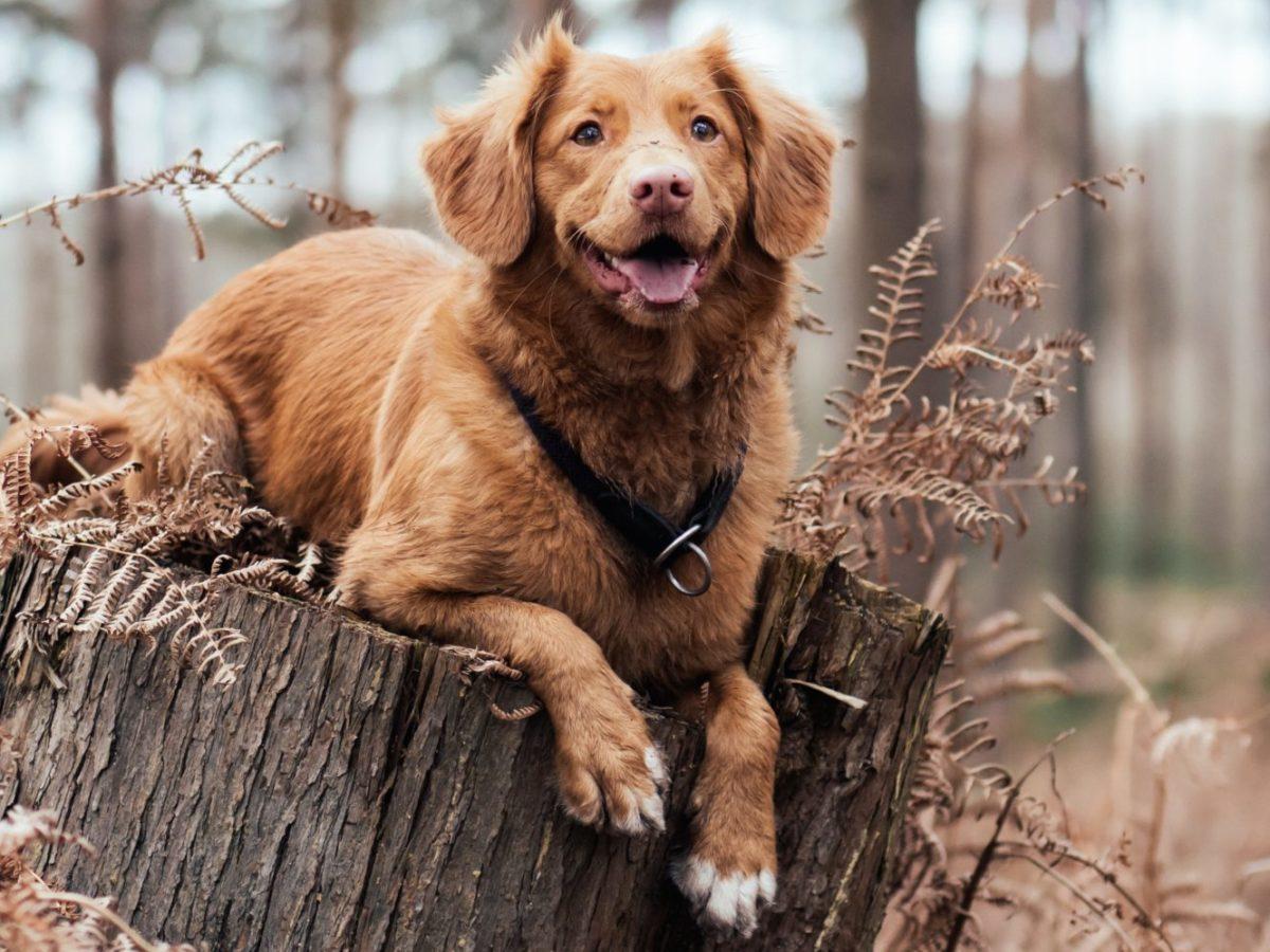 dog_on_tree