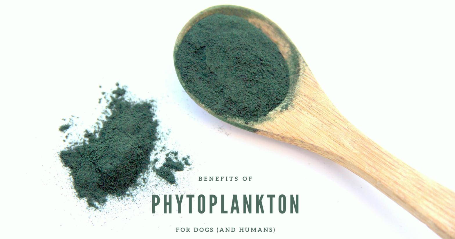 phytoplankton_spoon