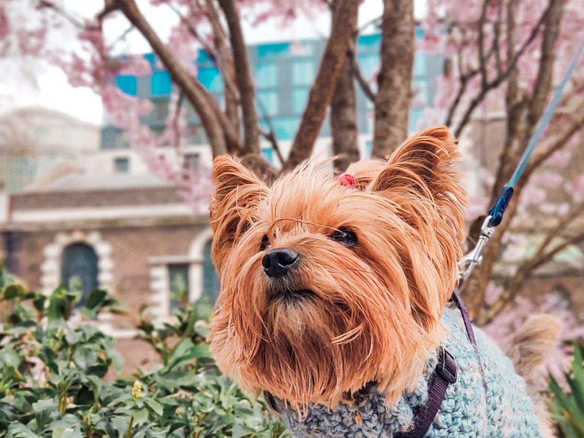 dog_spring