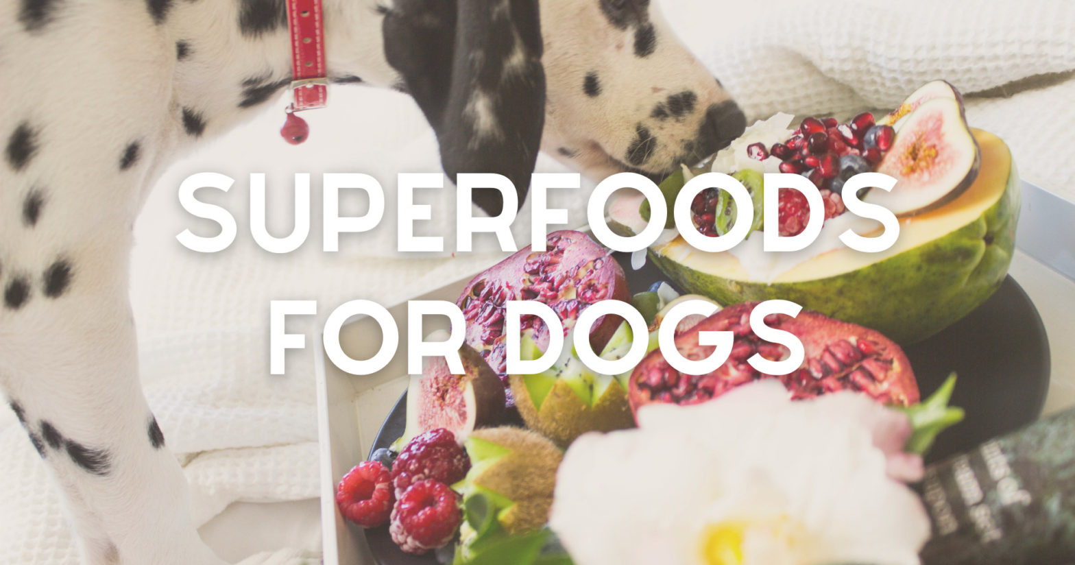 superfoods_for_dogs