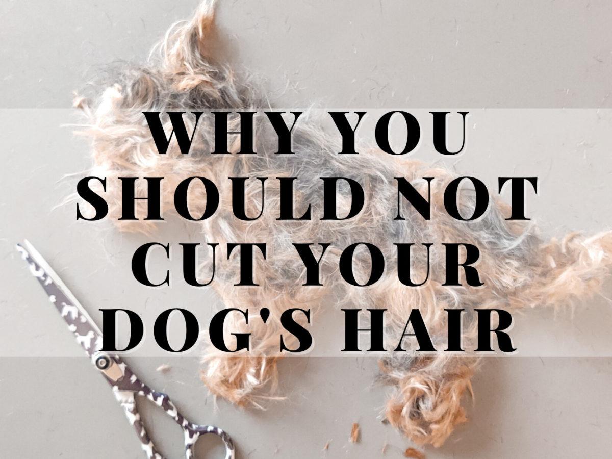 not_cut_dog_hair